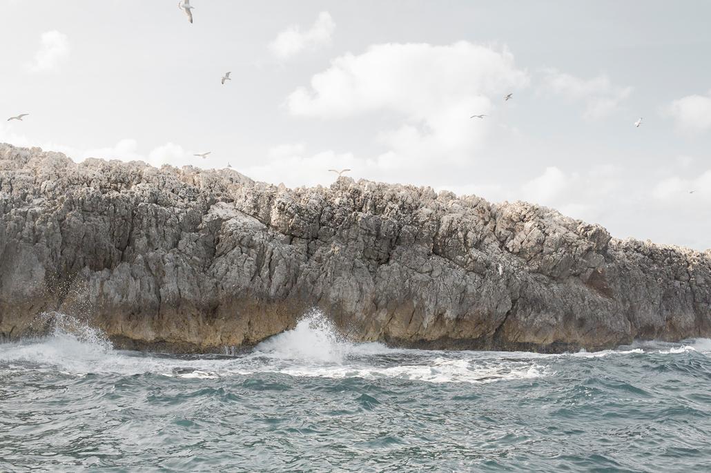 The shearwater's wing / L'ala della Berta