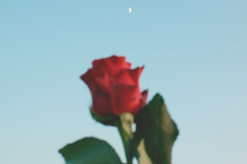 There is no thorn without a rose